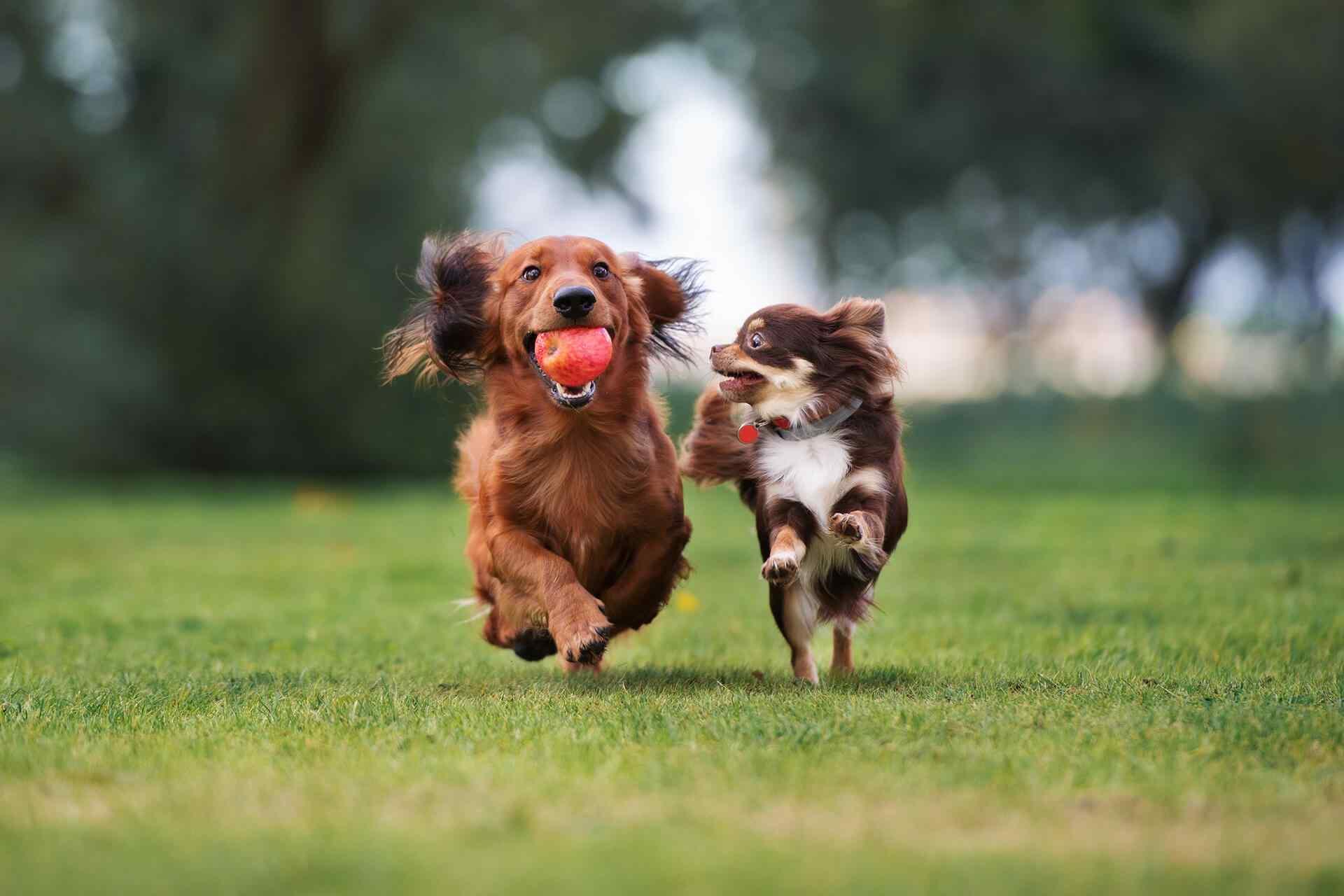 http://www.dog-adoptions.com/wp-content/uploads/2018/09/portfolio_04.jpg