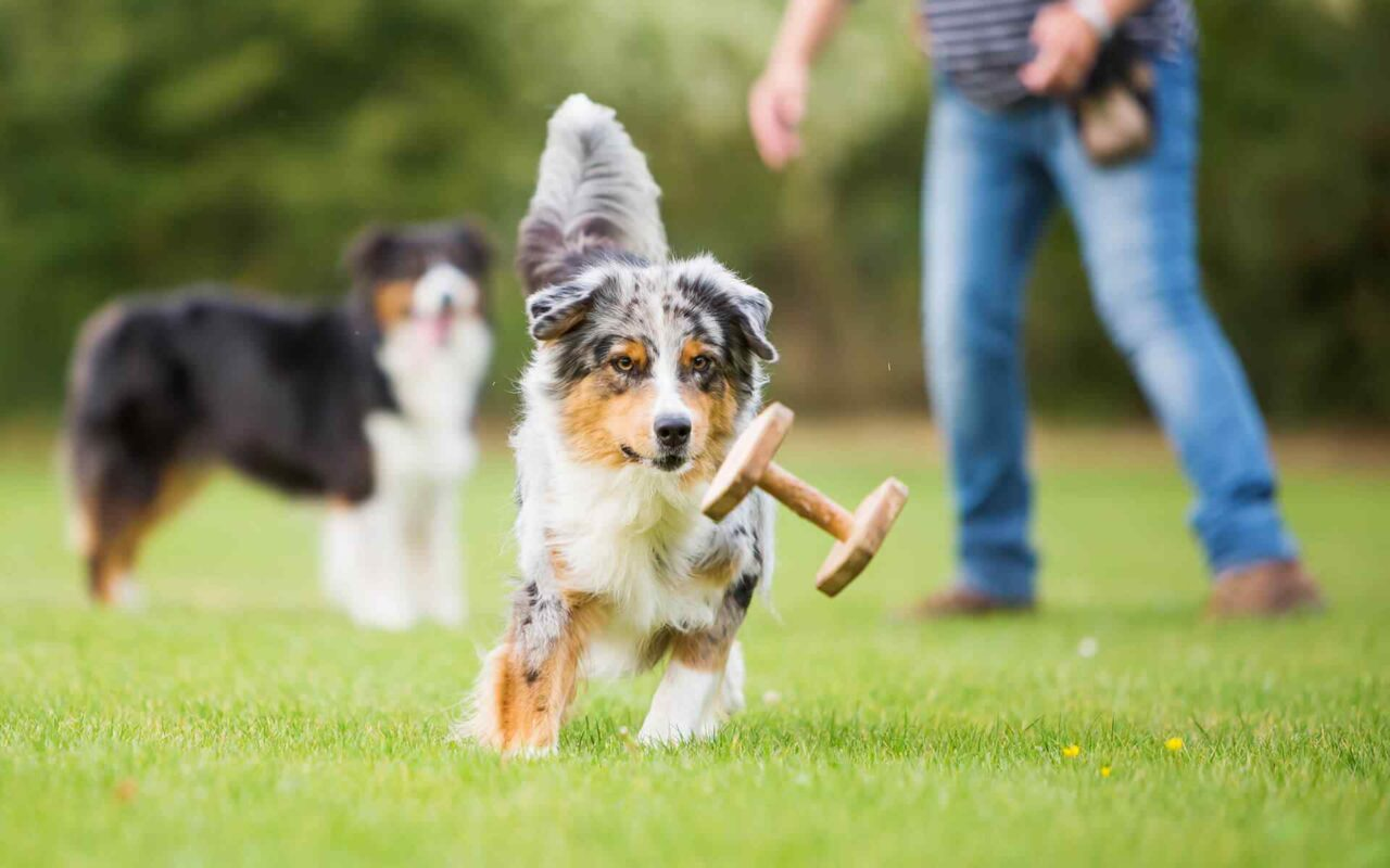 http://www.dog-adoptions.com/wp-content/uploads/2018/09/post_01-1280x800.jpg