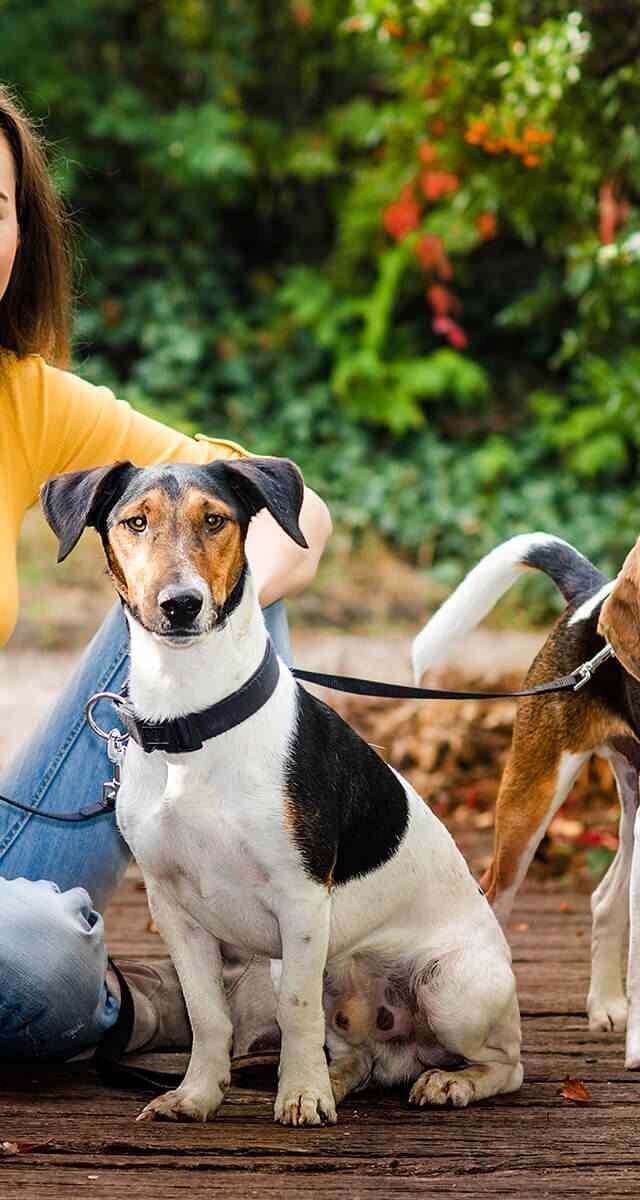 http://www.dog-adoptions.com/wp-content/uploads/2018/09/post_02-640x1200.jpg
