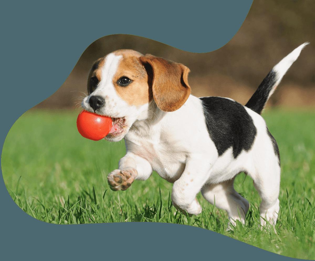 http://www.dog-adoptions.com/wp-content/uploads/2019/07/hero_image_01.png