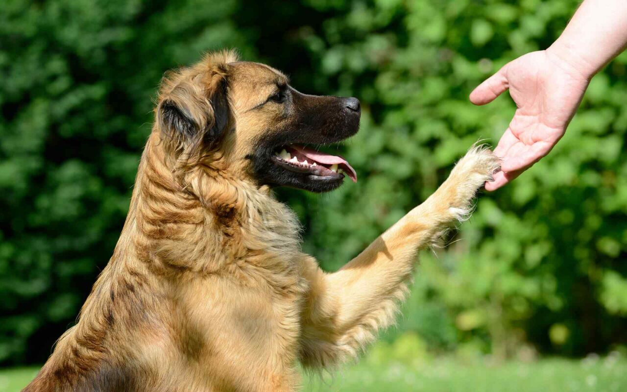 http://www.dog-adoptions.com/wp-content/uploads/2019/07/post_11-1280x800.jpg